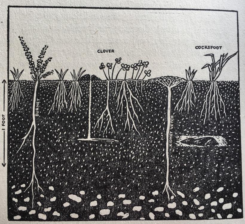 soil_and_sense_03