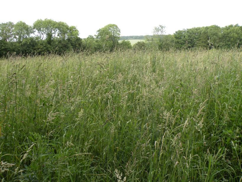 meadow-6
